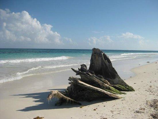 Suenos Tulum: beach