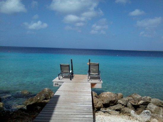 Divi Flamingo Beach Resort and Casino : My patio view