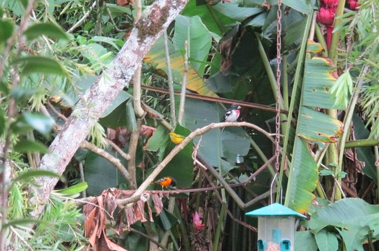 Cielito Sur Bed and Breakfast: Migrant birds mix with year round birds in trees & feeders