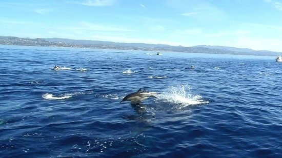 Dana Point, CA: Short-beaked common dolphins airborne!