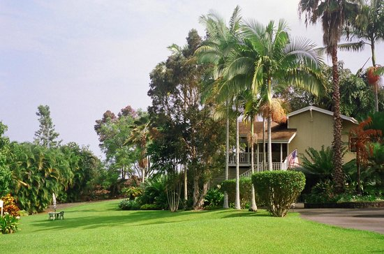 Areca Palms Estate Bed and Breakfast : Over 20 types of Palms