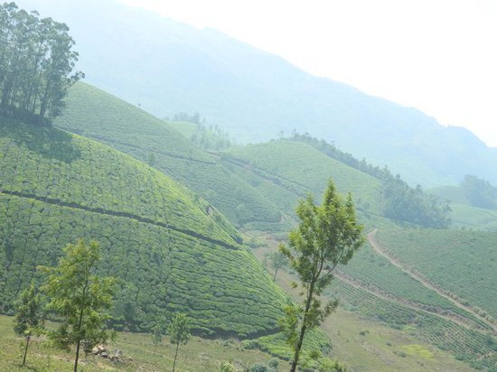 Misty Home Stay : A view from the top of the house
