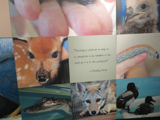 Clinic for the Rehabilitation of Wildlife (CROW): Quote I liked