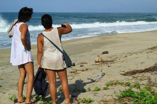 Playa Los Angeles: Finca Los Angeles