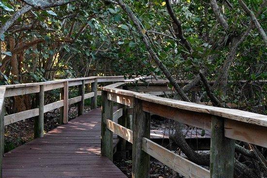 Marie Selby Botanical Gardens: Mangrove Bridge