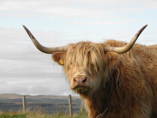 Westwards: highland neighbor