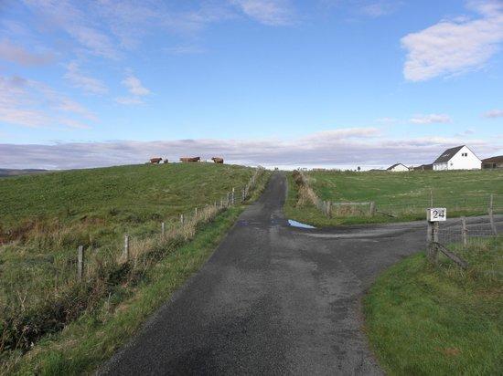 Westwards: highland cows on Borve Road