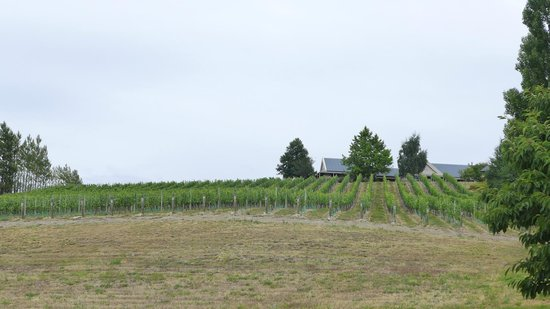 Hawkdun Rise Vineyard & Accommodation: 丘の下から家を臨む