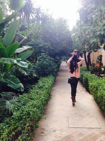 Les Jardins de la Medina : Garden...