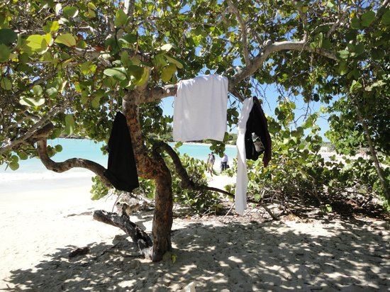 Playa Sucia: Trees and shade