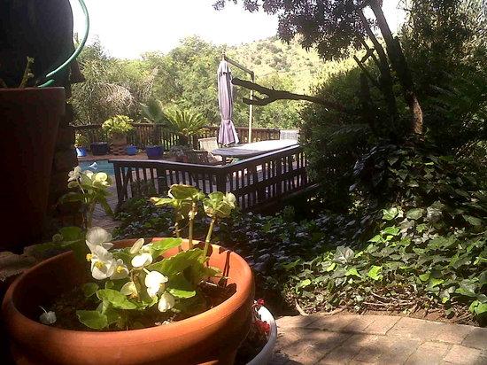 Gecko Ridge Guest House: garden