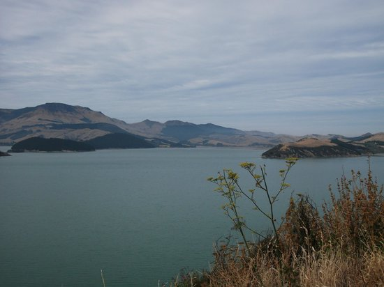 Akaroa Sightseeing Tour - Orienz International Ltd: Governers Bay