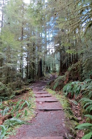 Sol Duc Falls: Stairs from the trail head