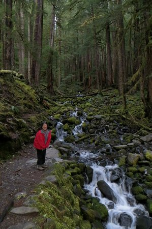 Cascades (not the falls; go another 0.5 miles to see Sol Duc Falls)