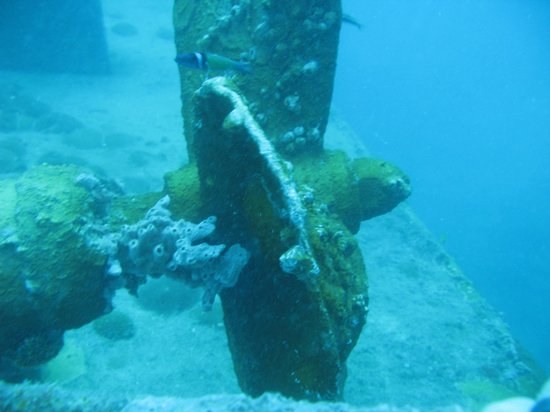 Octopus Diving: Prop on an up turned tug boat