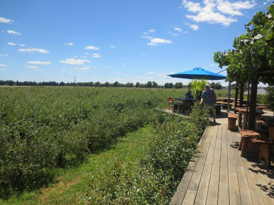 Cafe Irresistiblue at Monavale Blueberries : Blueberries