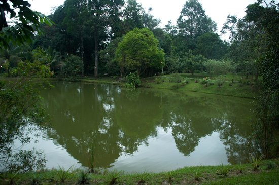 The Kebun: Lake in the farm