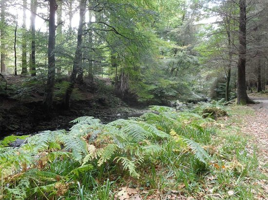 Tollymore Forest Park: Shimna river walk