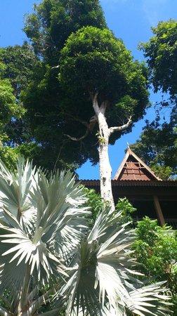 Berjaya Langkawi Resort - Malaysia : un parc bien agréable