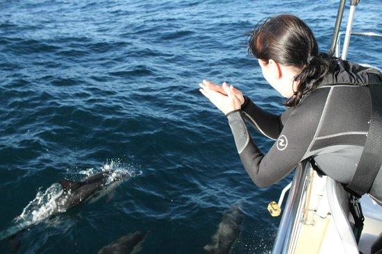 Dolphin Swim Australia: we encountered over 100 dolphin
