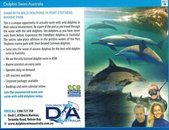 Dolphin Swim Australia: Brochure advert