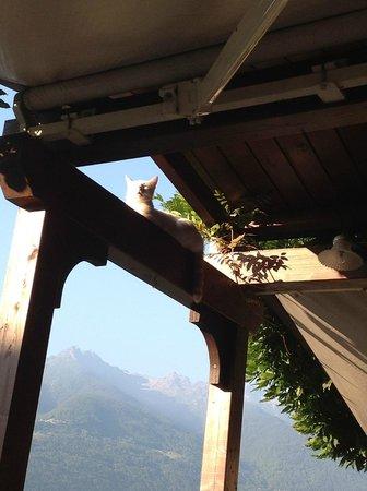Locanda Altavilla : Il  suo  gatto  prende  il  sole!!