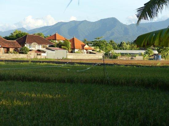 Puri Bagus Lovina: uitzicht vanaf de voorkant