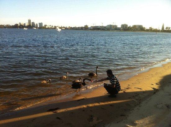 写真Swan River枚