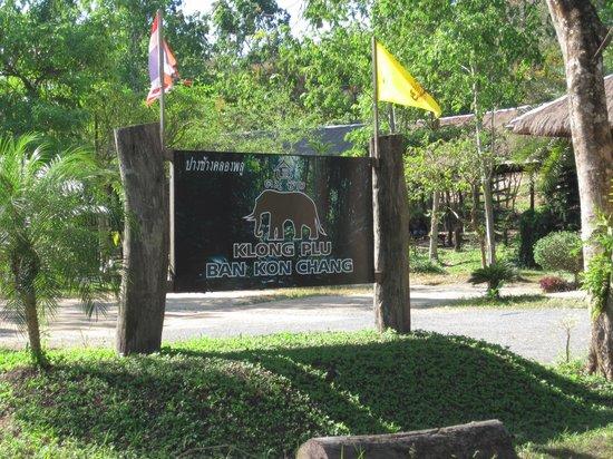 Klong Plu Waterfall: Слоновая ферма