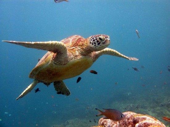 Dive The World: Sipadan
