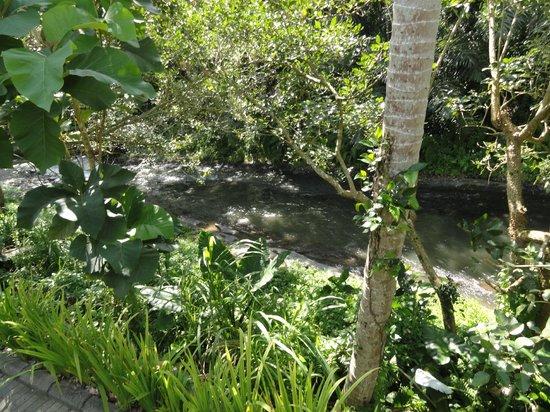 The Samaya Bali Ubud : The Ayung River from the Villa's Terrace