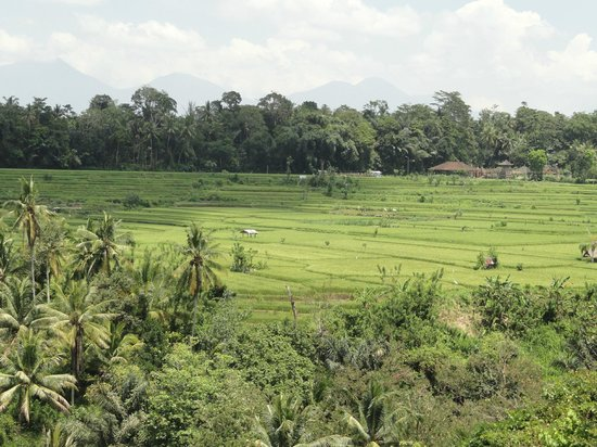 The Samaya Bali Ubud : Rice Paddies from the Restaurant at Breakfast