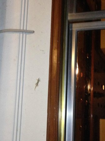 Golden Temple Villa: everywhere lizards... fortunately not inside of the hotel!!