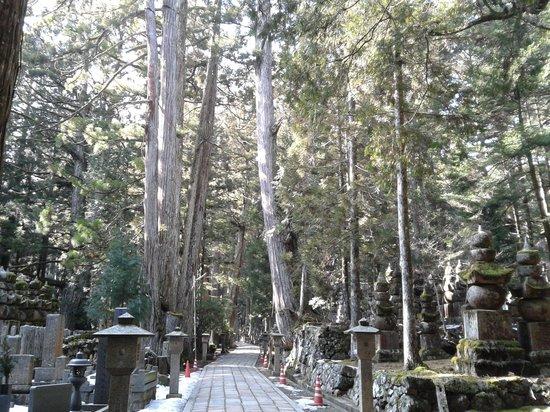 Mount Koyasan : serene tree lined path