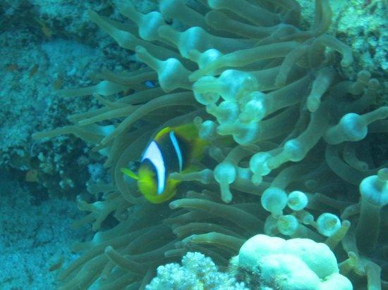 Black Rock Dive Centre: Fish!