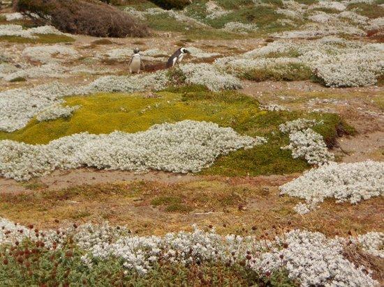Otway Sound & Penguin Reserve: otway sound