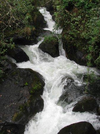 Termas de Papallacta: Waterfall on hike on preserve.