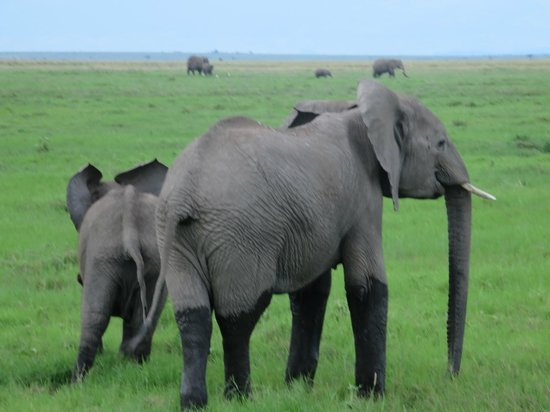 Amboseli National Park : Elephant socks