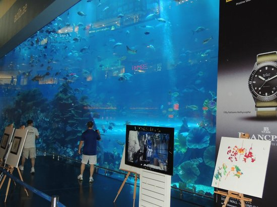 The Dubai Mall : The Aquarium