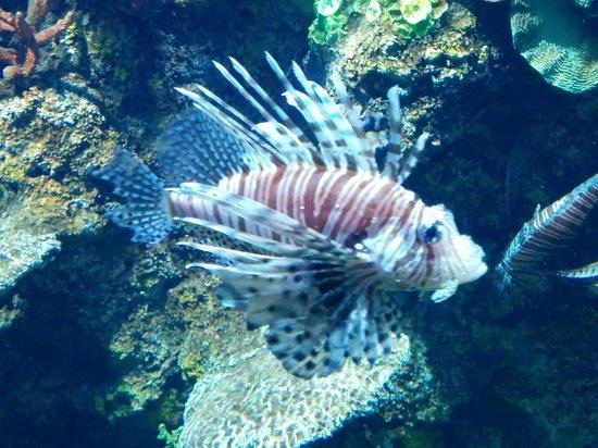 Malta National Aquarium: The  scorpion fish