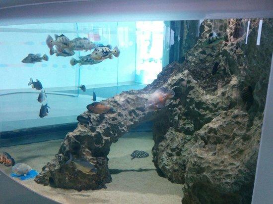 Malta National Aquarium: Entrance fish tank