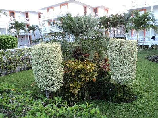 Sunscape Sabor Cozumel: Garden