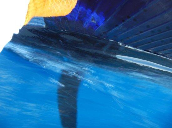 Drake Bay, كوستاريكا: Sailfish Close-up