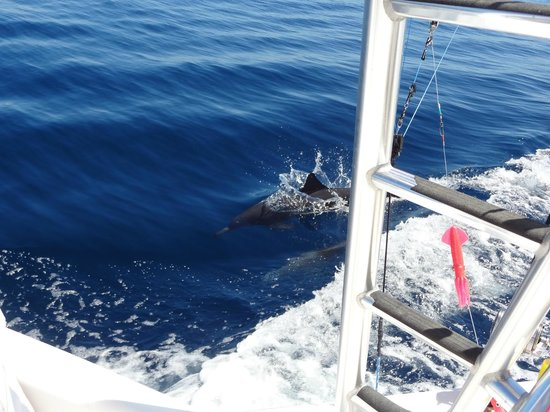 Drake Bay, كوستاريكا: Spinner Dolphins following the boat....get ready to catch some tuna!