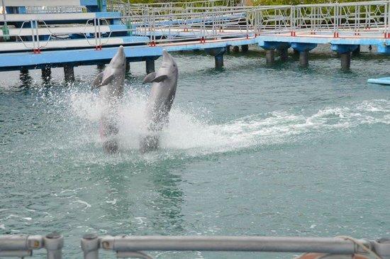 Dolphinarium, Cayo Naranjo: come and
