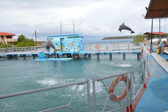 Dolphinarium, Cayo Naranjo: fun