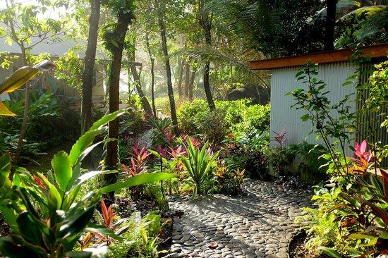 Pagua Bay House Oceanfront Cabanas: PBH Gardens