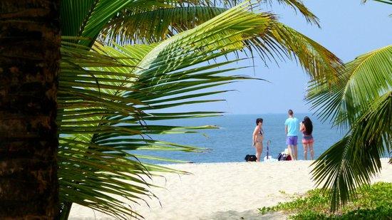 Marari Beach Resort: La plage