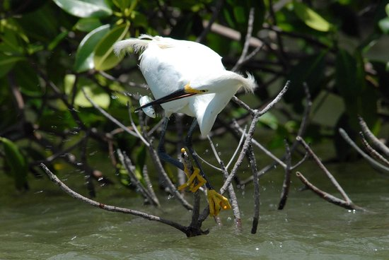 Marco Island Boat Tours: 10,000 Island Expedition