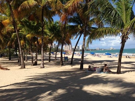Pine Grove Beach: palm beach at isla verde